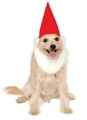 Gnome dog costume